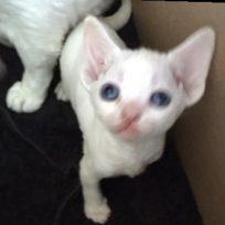 July Kittens 2016