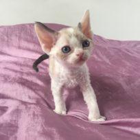 kitten/n 09 33/Poland