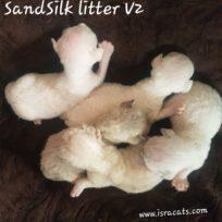 SandSilk's litter V2